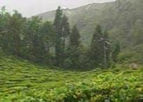 Storm in the tea cup as Darjeeling engulfed in turmoil