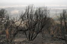 Australian Bushfires Threaten to Drive Tiny Animal Communities Extinct