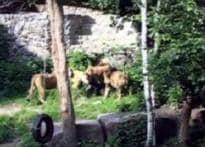 Lioness kills man who invoked God