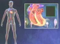 IBNLiving: Facts on Hepatitis C, diabeties