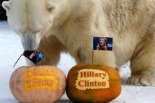 Monkey King, Polar Bear, Chanakya the Fish Choose Trump over Hillary