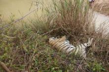 Elderly Tigress Dies at Bandhavgarh, Fourth Mortality at Reserve in Fortnight