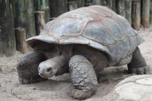 45-Year-Old Tortoise Burns House Down for Christmas, Barely Manages to Make it Out Alive