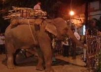 Elephants banned in Mumbai, left in the lurch