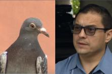 Pigeon Poops on Politician Talking About Menace of Pigeon Poop