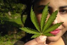 Cannabis-based Drug May Help in Motor Neuron Disease