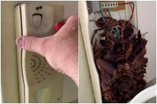 Bugged: Australian Family Finds Hundreds of Cockroaches Living Inside Old Landline Phone
