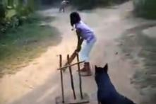 Watch: Dog Playing Cricket Wins Hearts, 'Best Fielder of the Year' Says Simi Garewal