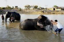 Indian Railways' Novel 'Plan Bee' Keeps Elephants Away from Train Tracks