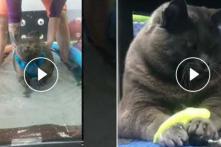 Watch: Obese Cat Runs Underwater Treadmill, Wins Hearts on Internet