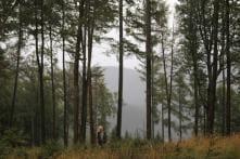 Living Near Woods May Cut Diabetes, Heart Disease Risk: Study