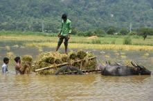 Monsoon Mayhem Batters Western India, Water from Maharashtra Dam Floods North Karnataka