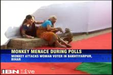 Monkey bites woman who was waiting to cast her vote in Bihar polls