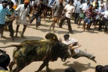 Police Lathicharge Protestors After 'Illegal' Jallikattu