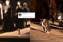 Cat-Walk, Literally: Feline Shows Up on Christian Dior Runway, Steals Show