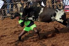 Jallikattu 2020: Here is Everything You Need to Know About the Bull-Taming Sport