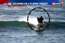 Watch: Dolphin Knocks Surfer Off Board Into Water in Australia