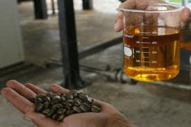 Castor Oil – Elixir of Healthy Scalp, Healthy Hair
