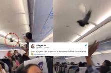 'Give Him a Boarding Pass': Jokes on Twitter Take Off after Video Shows Pigeon Inside GoAir Flight