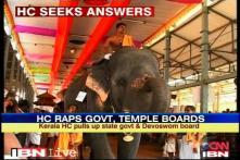 Explain use of elephants during festivals: Kerala HC