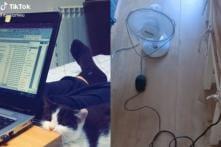 Watch: TikTok Users Share Their Experiences of Work from Home amid Coronavirus Lockdown