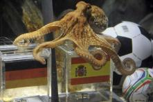 It's official: octopus picks Spain over Germany