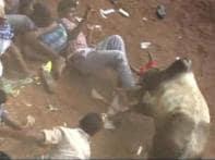 25 injured in Pongal's 'jallikattu', a blood-sport