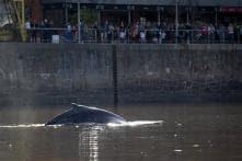 Whale appears alongside yachts in luxury Argentine Area