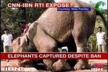 Govt allows WB to capture elephants despite ban