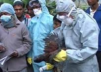 Bird flu becoming a political nightmare for Buddha
