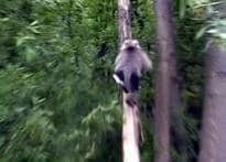 Monkey business disrupts J&K life