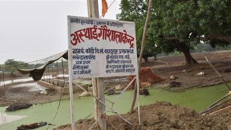 ਗਊਸ਼ਾਲਾ 'ਚ ਇੱਕ ਹੀ ਦਿਨ 'ਚ 35 ਗਊਆਂ ਦੀ ਮੌਤ...
