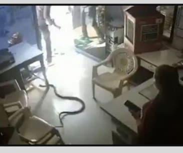 VIDEO: ਬੋਤਲ 'ਚ ਪੈਟਰੋਲ ਦੇਣ ਤੋਂ ਮਨ੍ਹਾ ਕੀਤਾ ਤਾਂ ਦਫਤਰ 'ਚ ਛੱਡ ਦਿੱਤਾ ਖਤਰਨਾਕ ਸੱਪ