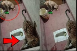Video- ਕੁੱਤੇ ਨਾਲ ਟਾਇਲਟ 'ਚ ਬੰਦ ਰਿਹਾ Leopard, 9 ਘੰਟੇ ਚਲਿਆ ਰੈਸਕਿਊ ਆਪ੍ਰੇਸ਼ਨ