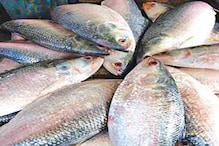 উরুগুয়ে থেকে এবার বাংলায় আসছে 'গরিব' ইলিশ ! কী সেই মাছ ? জেনে নিন