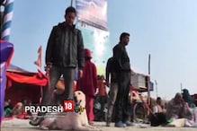 Video: কড়া নিরাপত্তায় মোড়া গঙ্গাসাগর মেলা