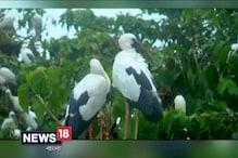 Video: ভিনদেশ থেকে পালা করে উড়ে এসে পর্যটক টানতে তৈরি পরিযায়ীরা