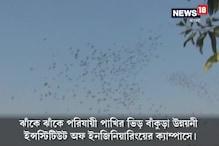 Video: পরিযায়ী পাখির ভিড় বাঁকুড়ায়