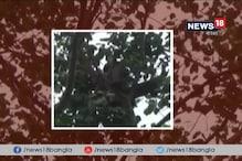 Video: সাতসকালে গাছে চড়ে বসলেন মানসিক ভারসাম্যহীন যুবক