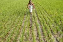 Budget 2019: প্রধানমন্ত্রী কিষাণ সম্মান নিধি প্রকল্প, প্রতি কৃষক পরিবারের জন্য বার্ষিক ৬ হাজার টাকা বরাদ্দ