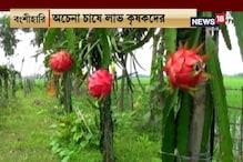 #EgiyeBangla: ড্রাগন ফল চাষে বিপুল লাভ করছেন বাংলার বহু মানুষ, দেখুন