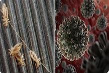 Coronavirus: করোনাকে খতম করতে উকুন মারার ওষুধ! সবচেয়ে দ্রুত করছে কাজ, চাঞ্চল্যকর দাবি অস্ট্রেলিয়ান গবেষকদের