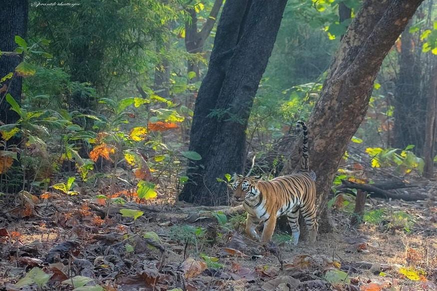 photo source Prantik Chatterjee