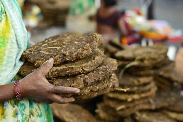 ভাল দামে গোবর কিনছে রাজ্য সরকার, ছত্তীসগড়ে বাড়ি থেকে চুরি গেল ১০০ কেজি গোবর