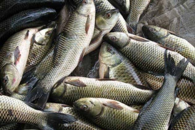 সিউড়ির বাজারে আস্ত অ্যাকোয়ারিয়াম! রোজ পছন্দসই জ্যান্ত মাছ পাচ্ছেন ক্রেতারা