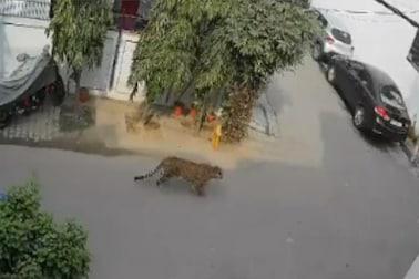 সাংঘাতিক! দিনের আলোয় গাজিয়াবাদের রাস্তায় বহালতবিয়তে ঘুরছে চিতাবাঘ, ভাইরাল CCTV ফুটেজ...