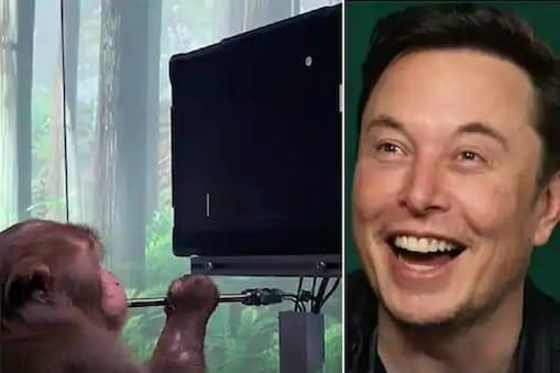 Elon Musk: প্রযুক্তির সাহায্যে মস্তিষ্ক নিয়ন্ত্রণ, বানরকে দিয়ে গেম খেলাচ্ছেল এলন মাস্ক, বিতর্ক তুঙ্গে