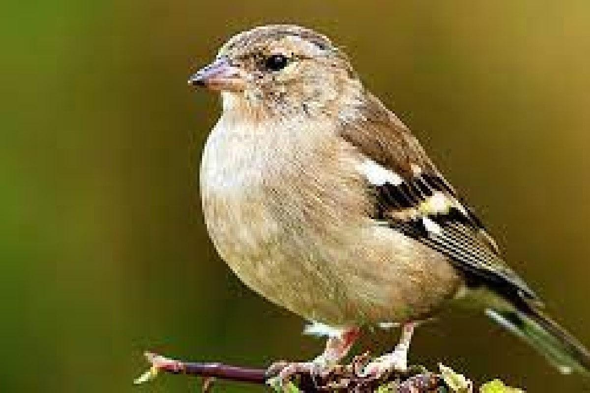 যে চার প্রজাতির পাখি সব থেকে বেশি সেগুলি হল- চড়াই (House Sparrows), ইউরোপিয়ান স্টারলিং (European Starlings), রিং বিল্ড গুলস (Ring-Billed Gulls) ও বার্ন সোয়ালোস (Barn Swallows)। এই চার ধরণের পাখির সংখ্যা এক হাজার কোটি।
