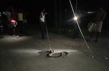 Siliguri: বাঘের পর এবার পাইথন! আতঙ্ক সুকনা চা বাগানের শ্রমিক মহল্লায়