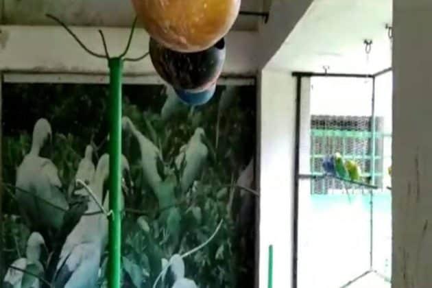 স্কুলবাড়িতে পোষা পাখিরা কেমন আছে, দীর্ঘ অদর্শনে জানতে আকুল পড়ুয়ারা